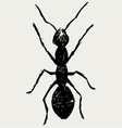 Portrait of ant vector image vector image