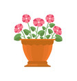 periwinkle flower in pot vector image vector image