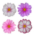 set of cosmos flowers isolated on white background vector image vector image