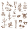 sketch spices and herbs flavorings vector image vector image