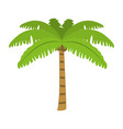 tropical palm nature tree style vector image vector image