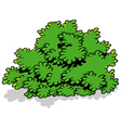 Green Cartoon Shrub vector image vector image