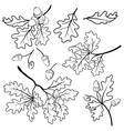 Oak branches with acorns outline vector image vector image