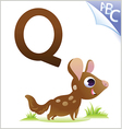 animal alphabet for kids q for quoll vector image