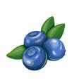 blueberry fruit berry vector image vector image