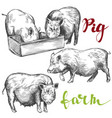 farm pig set hand drawn vector image vector image