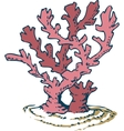 Pink Coral vector image