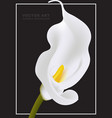 white calla flower card template isolated vector image