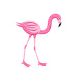 pink flamingo for summer party cards flat cartoon vector image vector image
