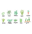 popular green garden plants icon set salad and vector image vector image