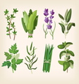 Seasoning and dressing herbs vector image vector image