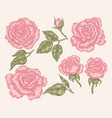 elegant pink rose flowers and leaves in vintage vector image