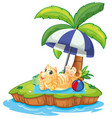a cat relax on the island vector image vector image