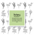 botany herbs and spices vector image vector image