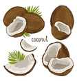 Coconut Isolated vector image