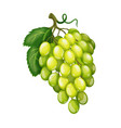grapes fruit berry vector image vector image