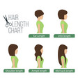 hair length chart side view vector image