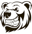 head a grizzly bear vector image vector image