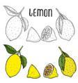 lime or lemon set vector image vector image
