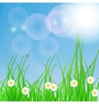 Spring green background Grass and flower vector image