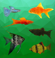 Aquarium Fish in polygon style vector image