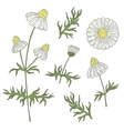 Camomile with stem and leaves hand drawing on a vector image vector image