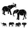 Elephants set vector image vector image