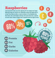 raspberry infographics in flat style vector image vector image