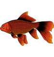red drum redfish with vector image vector image