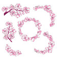 set of branches with cherry blossoms collection vector image vector image