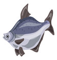 bluegill fish icon cartoon style vector image