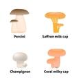 edible mushrooms vector image