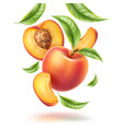 peach nectarine leaf slice swirl motion vector image vector image