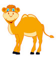 cartoon of the merry camel vector image vector image