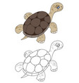 floating turtle vector image