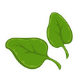 two small green leaves vector image vector image