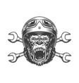 ferocious gorilla head in moto helmet vector image vector image