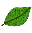 green leaf drawing by hand vector image