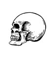 hand drawn human skull on white background design vector image vector image