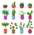 house plants in pots in flat vector image vector image