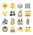 rapeseed icon vector image vector image