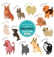 dogs and puppies depicting different fur vector image