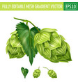 hops on white background vector image