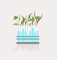 plant samples growing in test tubes scientific vector image