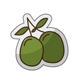 olive plant isolated icon vector image