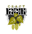 craft beer hand drawn design with hops and leaves vector image vector image