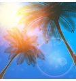 Palm trees and sun in sky vector image
