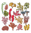 seaweed and corals underwater natural plants vector image vector image