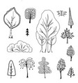 trees birch bushes tree doodle vector image