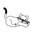 cat cartoon on white background vector image vector image